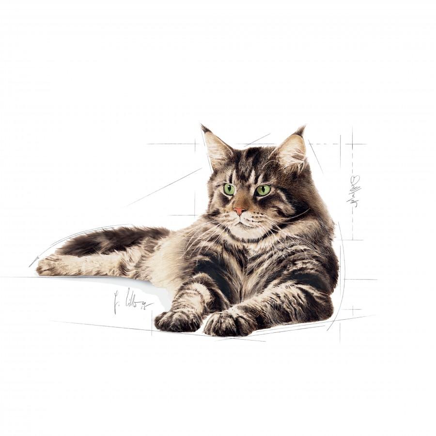 royal canin maine coon adult 10 kg hrana uscata pentru pisici. Black Bedroom Furniture Sets. Home Design Ideas